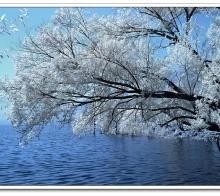 千树似堆雪,万草疑凝霜——红外摄影的独特韵味