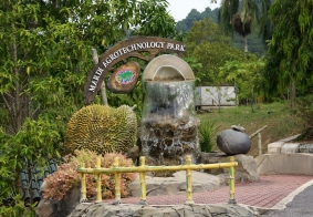 【大千世界】兰卡威的热带植物园
