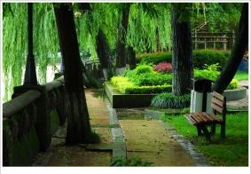 【闲照】公园随拍 雨后小照