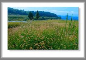 【【  七 坪 寨 的 草 甸  】】………………