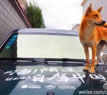 【旅途趣闻】女孩带着她的小土狗 游走5个国家,几十个城市