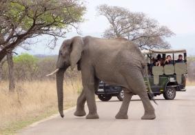 【大千世界】南非克鲁格野生动物园里的大象