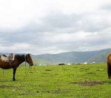 【淘友团丽江】等到草原最美的季节陪你一起看草原