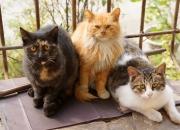 【萌物】猫咪