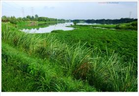 【闲拍】河滩 绿道小照