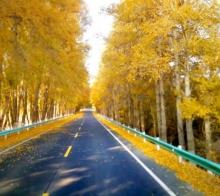 新疆天池景区道路意外收获