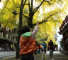 深秋里的一抹金黄,都江堰灵岩山。