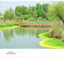 【闲拍】崇州:桤木河湿地公园近照