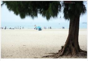 "【组照】广西:北海银滩""扫滩"""