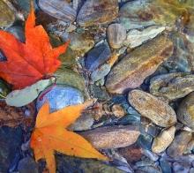 唐家河  最后的秋色