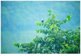 【随拍】峨眉之山间闲照(6):鸟啊虫啊啥子啊……
