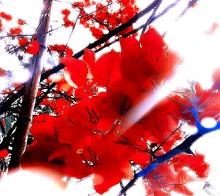 【【  鲜红色的蝴蝶在翩翩起舞  】】………………