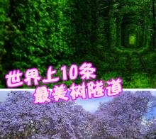 【四川最美树隧道】春暖花开,踏春放风筝拍花花,寻找四川最美树洞。