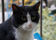 【萌物】如果窗外的动物不是猫......