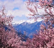 3月份越野自驾川藏线走进林芝看十里桃花