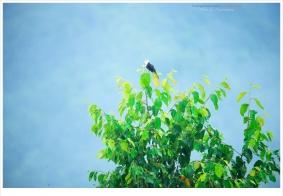 【随拍】峨眉之山间闲照(7):再来几张远距离的鸟……