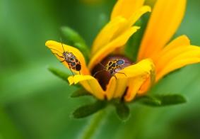 #纳凉# 拍昆虫
