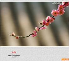 【小照】红梅花儿开