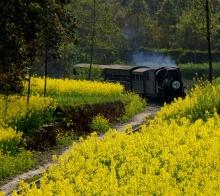 [春色]工业活化石:嘉阳蒸汽小火车随拍